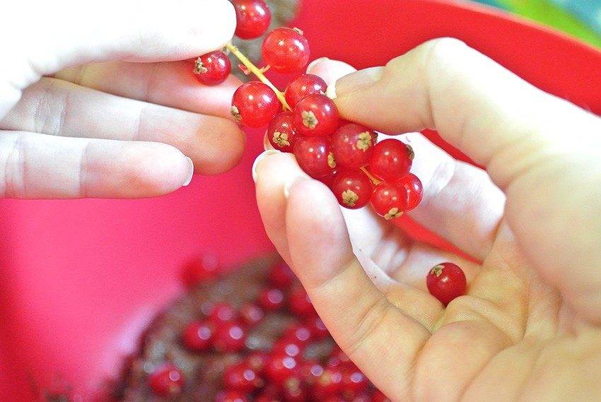 Fold in currants