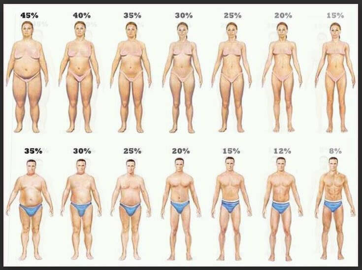 Men vs Women Body Fat Percentage